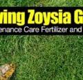 Cultivo de pasto Zoysia - Fertilizante de cuidado de mantenimiento y más -