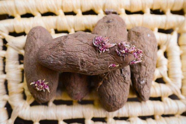 Cultivo de patatas a partir de semillas: de principio a fin