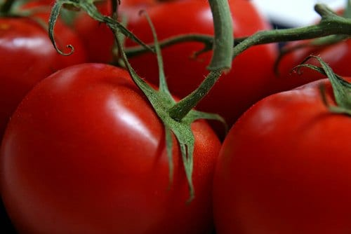 Growing Tomatoes Should You Remove Bottom Leaves