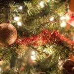 Datos sobre el árbol de Navidad: real versus artificial ⋆ Gran blog sobre jardinería