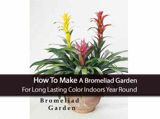 attractive bromeliad garden in clay pot