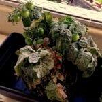 El compuesto reduce las enfermedades de las plantas.