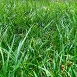 El ecosistema próspero en el suelo de su césped y por qué es importante ⋆ Gran blog sobre jardinería
