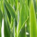 El efecto adverso de los fertilizantes en nuestros suelos.
