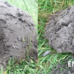 El efecto de la densidad del suelo.