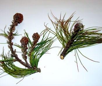 El herbicida que sigue creciendo G gran blog sobre jardinería