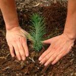 El mejor momento para plantar árboles