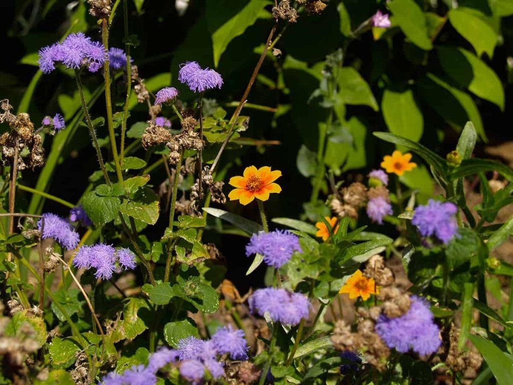 El otoño es el mejor momento para plantar y trasplantar ⋆ Gran blog de jardinería