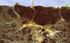 El papel de los microbios del suelo en la fertilidad química.