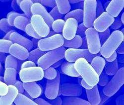 El papel destacado de las bacterias del ácido láctico en la agricultura y la EM
