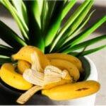 El poder mágico de las cáscaras de plátano en el jardín, o no