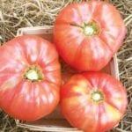 En busca de información: ¿cuáles son sus cinco tomates tradicionales favoritos?