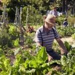 Los beneficios de la terapia de jardinería para la recuperación de adicciones ⋆ Gran blog sobre jardinería