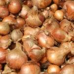 Es hora de pedir ajo y cebollas perennes: cómo elegir cuáles cultivar en su jardín