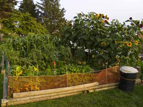 Es hora de planificar el jardín orgánico de este año ⋆ Gran blog de jardinería