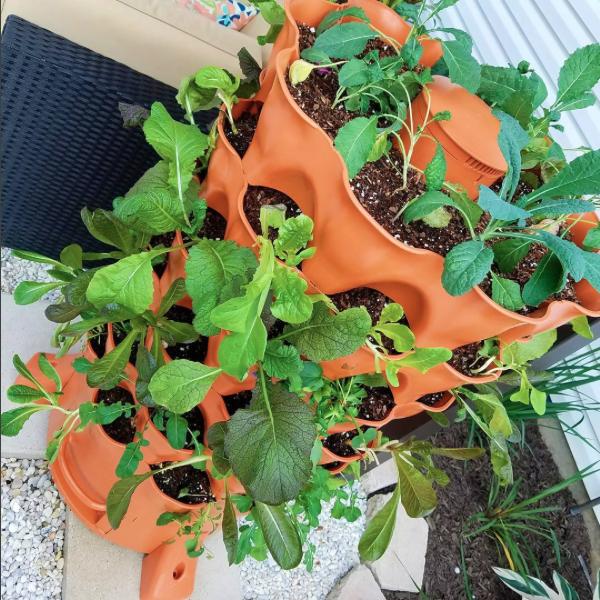 Estas son las formas más populares de cultivar alimentos, ¡verticalmente!