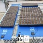 Esteras térmicas para plántulas: ¿son necesarias?