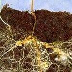 Estimulación de hongos