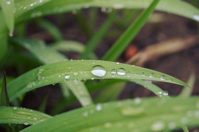 Estrategias para lidiar con suelos extraídos de agua