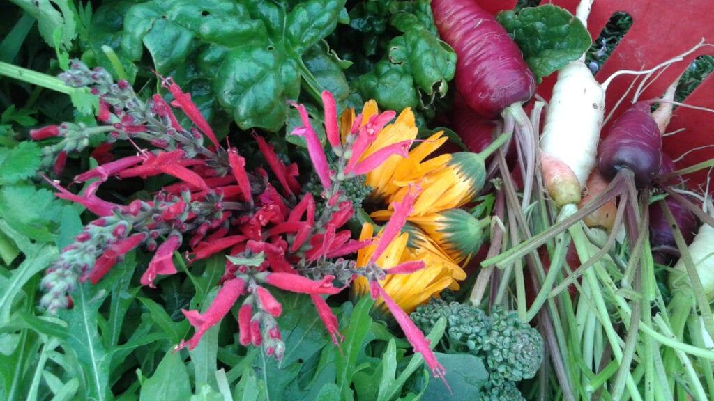 Excelentes resultados para los jardineros orgánicos en la isla Waiheke