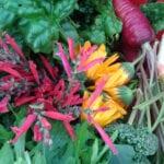 Por qué el acondicionamiento del suelo es importante para una jardinería saludable