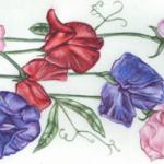 Flores anuales de Hardy para la primavera