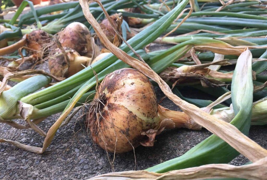 Gran blog de jardinería en las redes sociales, alimentación RSS y boletín informativo por correo electrónico ⋆ Gran blog de jardinería