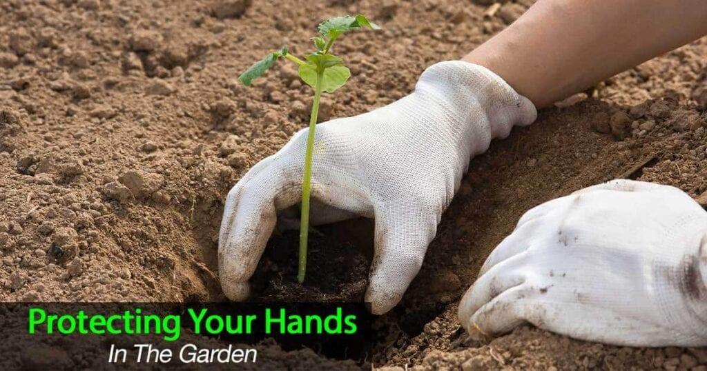 garden gloves protecting hands