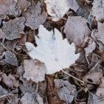 Guía de cobertura de invierno |  Blog de jardinería con Estiercoles.coms