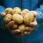 Guía de cultivo de patatas |  Blog de jardinería Estiercoles.com