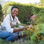 Guía de cultivo de pimientos: contenedores o jardín