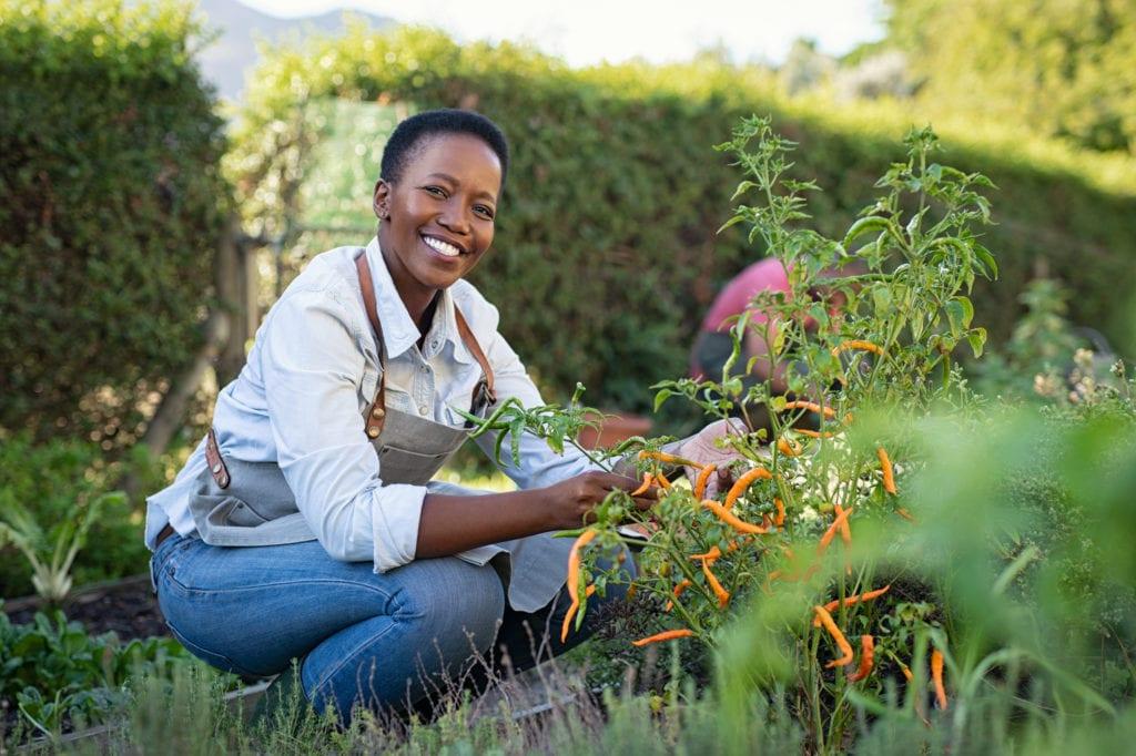 Una mujer recogiendo pimientos en el jardín.