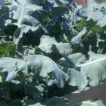 Guía para plantar un jardín de otoño