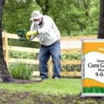 Herbicida Harina de gluten de maíz: ¿funciona para las malas hierbas?