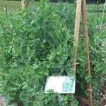 Haz un enrejado para tu jardín ⋆ Gran blog de jardinería
