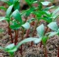 Herramientas de inicio de semillas favoritas de Mark: West Coast Seeds