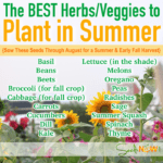 Hierbas y verduras para plantar ahora para un jardín de verano