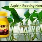 Hormona de enraizamiento de la aspirina: ¿funciona?