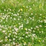 Incremento de materia orgánica y biología en sistemas pastorales - Cobertura de pastos