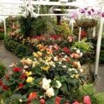 Inoculantes microbianos: qué, cómo y por qué pueden beneficiar a su jardín
