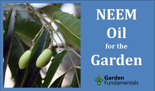 Neem Oil Insecticide and Fungicide For Plants, image source: Hayavadhan
