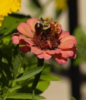 Invita abejas a tu huerto orgánico ⋆ Gran blog sobre jardinería