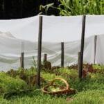 Jardín de lechugas de otoño |  Intercambio de semillas de exposición al sur