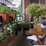 Jardinería balcón |  Blog de jardinería Jung Seed