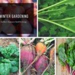 Jardinería de invierno |  Intercambio de semillas de exposición al sur