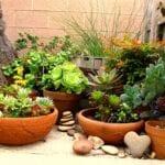 Jardinería en contenedores: selección de los fertilizantes adecuados