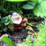 Jardinería orgánica: ¿eres un jardinero orgánico?