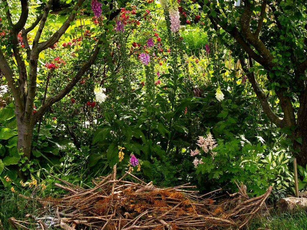 Joy Of Shade Gardening ⋆ Gran blog sobre jardinería