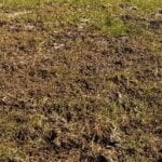 La compactación del suelo, el asesino de la producción
