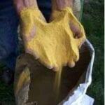 La harina de gluten de maíz mata las malas hierbas del césped